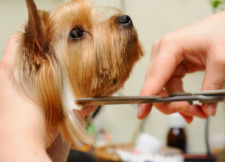 best affordable pet groomer in east coast